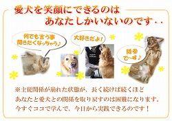 犬のしつけ春川02