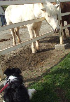 お馬さんとマリン♪