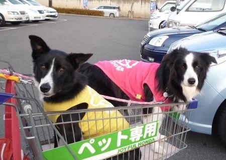 ジョイフル本田20120122