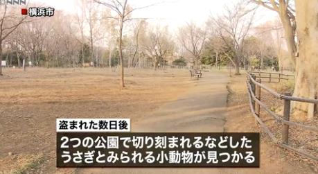 2chまとめ【神奈川】ウサギ虐待死の疑いで住所・職業とも不詳の19歳少女を追送検 「動物の腹の中に興味があった」と供述