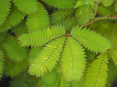 観葉植物に生えてしまったカビ退治のお話。/ビリーヴお役立ち情報