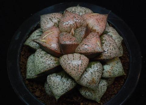 103-syugyokuden-ozawa