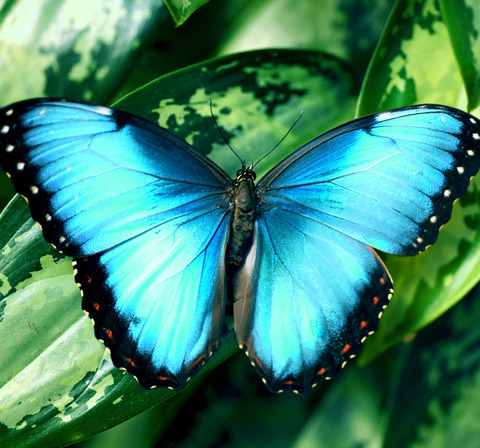 forest-butterfly-2