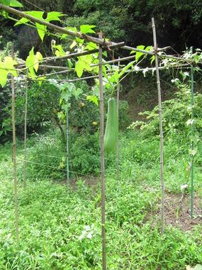 いすみの庭 028