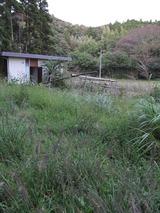 千葉の庭 004