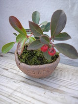 ぶるーむこうぼう豆鉢