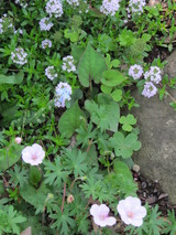 庭と植物 140