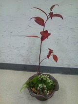 ミニ盆栽3