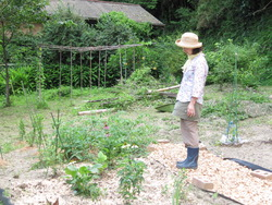 いすみの庭 017