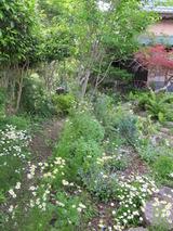 庭と植物 137