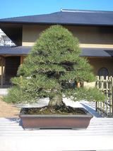 2011 1月日記 012