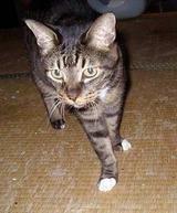 ken猫 014