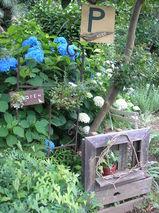 庭と植物 012