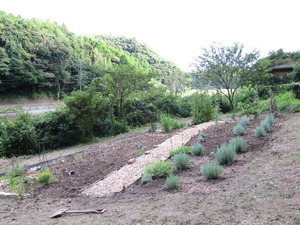 いすみの庭 039