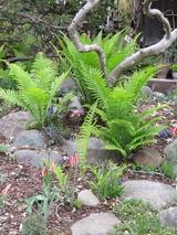 庭と植物 086