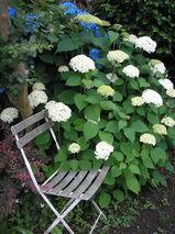 庭と植物 009