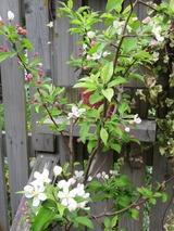 庭と植物 097