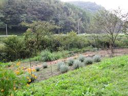 いすみ庭2012 10月 004