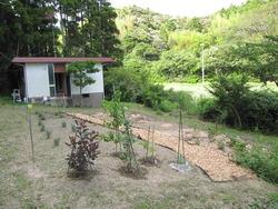 いすみの庭 022