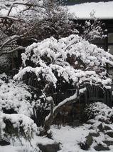 2010 1月日記 161