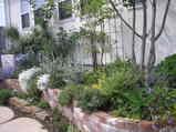 syoko's 庭と家 008