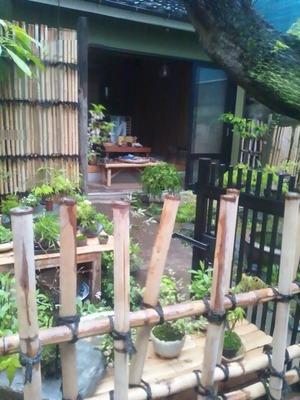 柳の庭さん1