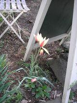 2009 4月日記 052