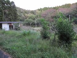 千葉の庭 003