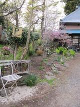 庭と植物 083