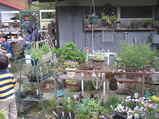 2010年4月ガーデンマーケット&古モノ市 036
