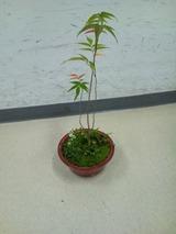 ミニ盆栽4