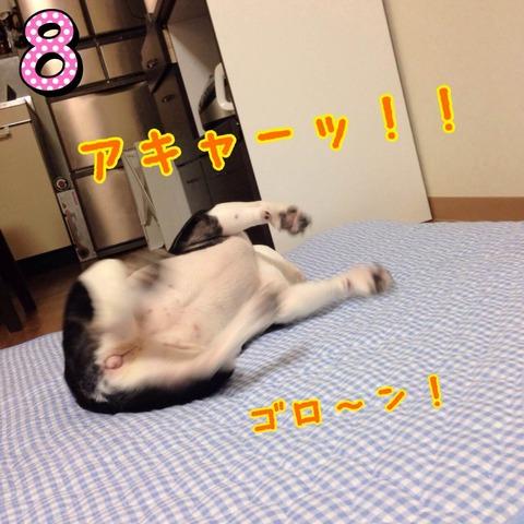 photo8 のコピー