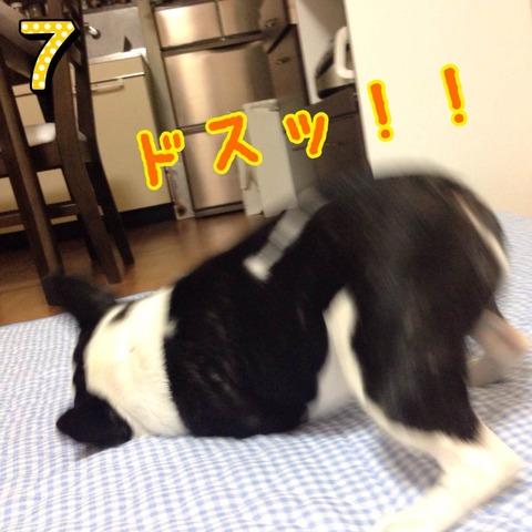 photo7 のコピー 2