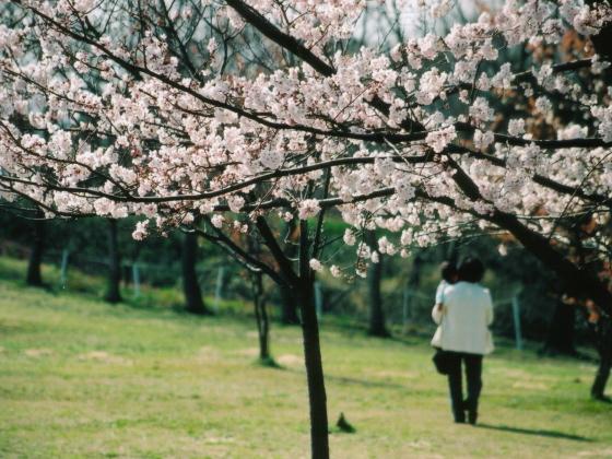 nanbu_park_eos02