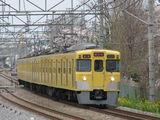 2000_sakura_001