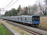 20101F_sakura_001