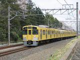2000N_sakura_006