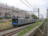 20101F_sakura_002