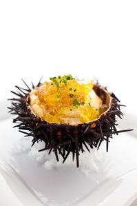 Sea_urchin2