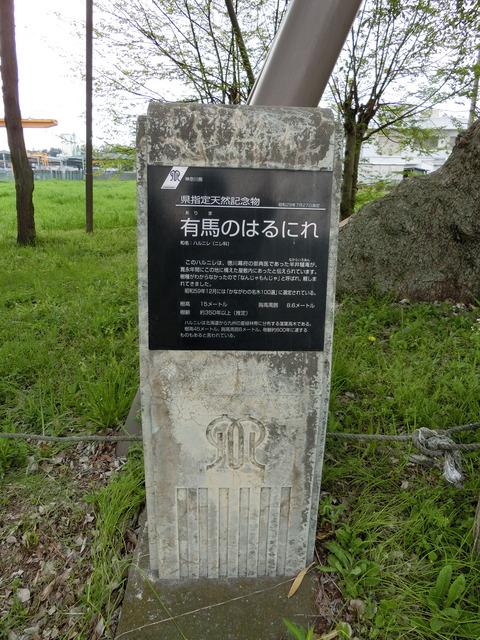 CIMG3579