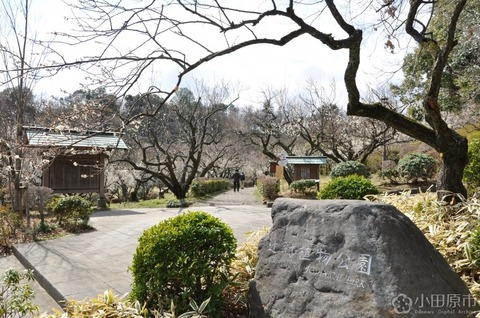 辻村植物公園2 小田原市公式様より拝借 久良岐のよし
