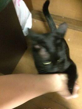 猫さん、荒れ狂う(※画像あり)