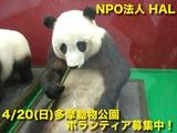 動物園宣伝