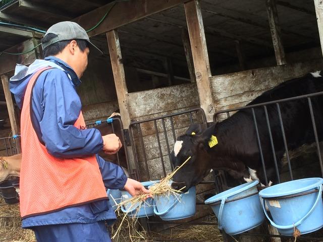 北海道 牧場 (4)