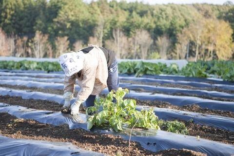 【悲報】無職ワイが親戚の農作業を手伝ってしまった結果・・・