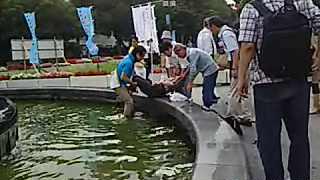 【参院選】 青山繁晴氏、演説中に噴水に落ち溺れかける男性発見→ずぶ濡れになり救出。救急車要請