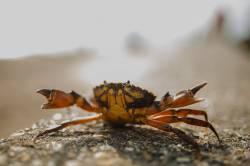 【動画】上海蟹 『鍋の中熱いンゴ!・・・せや!』