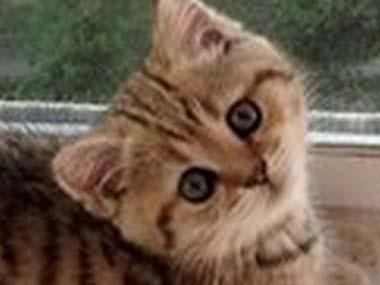 やんちゃだった子ネコがいつの間にか大きくなった → でも窓辺の「お気に入りの場所」は今でも変わらないようです