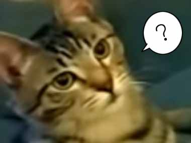 【ネコ】 うちの犬をトリミングした → 後ろの猫はこんな感じ…