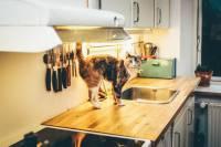 ワイ閉店間際の猫カフェへ(画像あり)